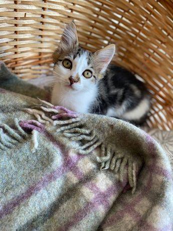 Котенок девочка Лапочка ищет дом
