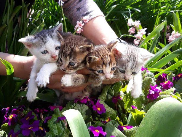 Отдам котят в добрые руки!)