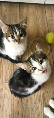Срочно ищут дом котята и щенок