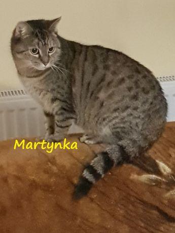 Spokojna kotka Martynka