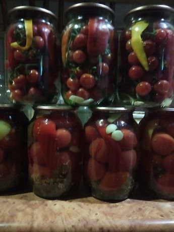 Продам помидорчики