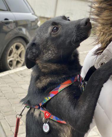 Маленькая собачка в хорошие руки