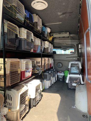 Животные в Европу, США, Канаду. Доставка, перевозка, delivery pets