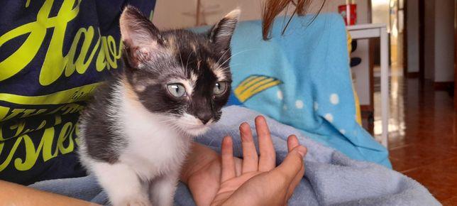 Dou gata para adoção