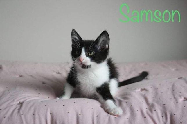 Samson liczy na Twoje dobre serce!