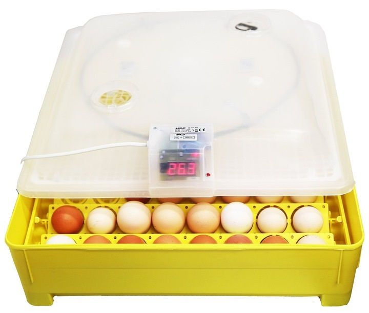 Inkubator wylęgarka klujnik do jaj iKar półautomatyczny 56/80 jaj HIT Ganiec - image 1