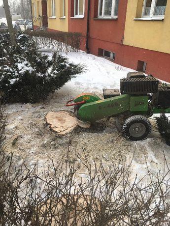 Usuwanie pni (frezowanie pni)  wycinka i cięcie pielęgnacyjne drzew.