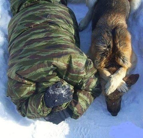 Дрессировка и воспитание собак!