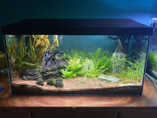 Akwarium Aquael 60 litrów z dwiema lampami