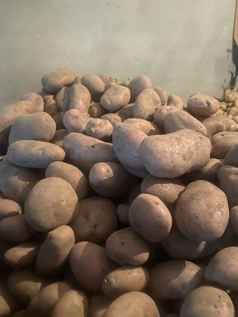 Vendo batatas de boa qualidade