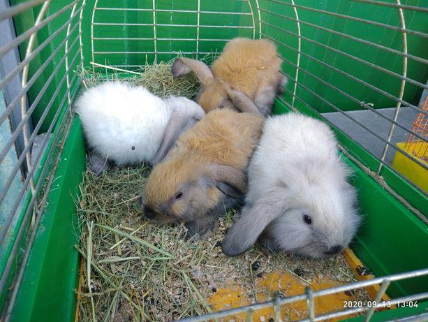 Кролики подростки