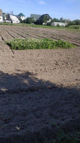 Огород, земля в оренду