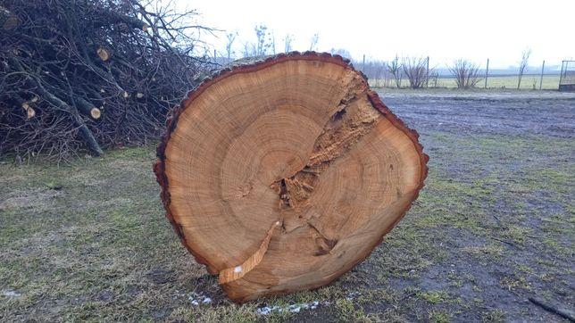 Drzewo Dąb Dębowe