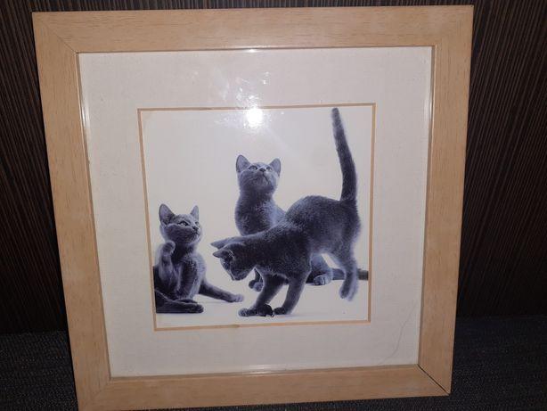 sprzedam obraz - koty