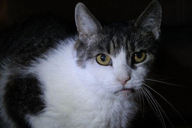 Kot kiciuś z Fundacji Kocia Klitka - szuka domu