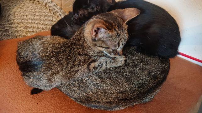 Male kotki :)
