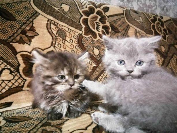 Безкоштовно котята