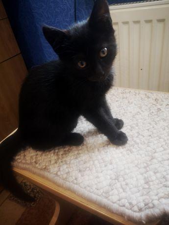 Чёрный кот 3 месяца в добрые руки.