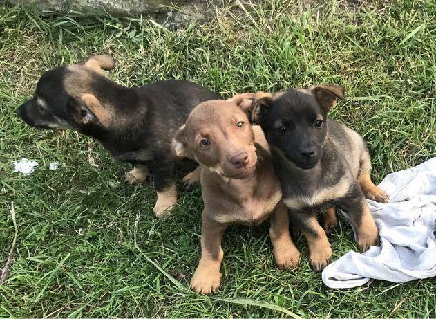 Oddam przesłodkie szczeniaki do kochajacego domu