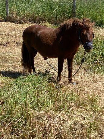 Estrume de cavalo biológico, excelente fertilizante natural.