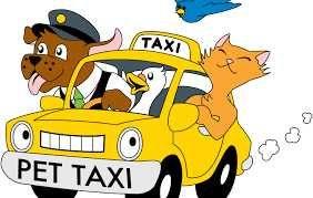 Przewóz zwierząt domowych. Transport psa, kota z właścicielem i bez.