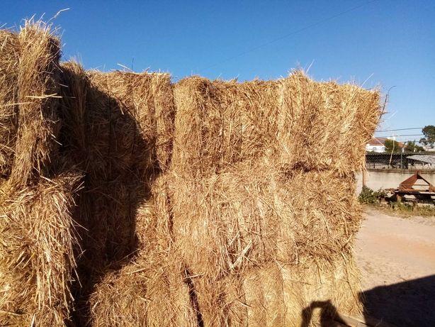 Vendo feno semeado aveia e tritical
