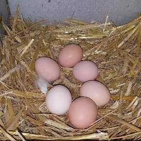 jajka sprzedam wiejskie smaczne
