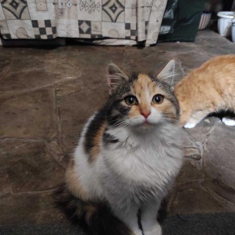 Отдам в любящие руки прекрасных котят
