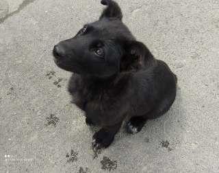Чудове цеценя дівчинка щенок