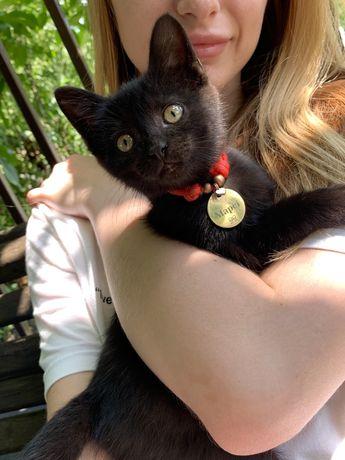 Кішечка котик кіт котеня кот котенок