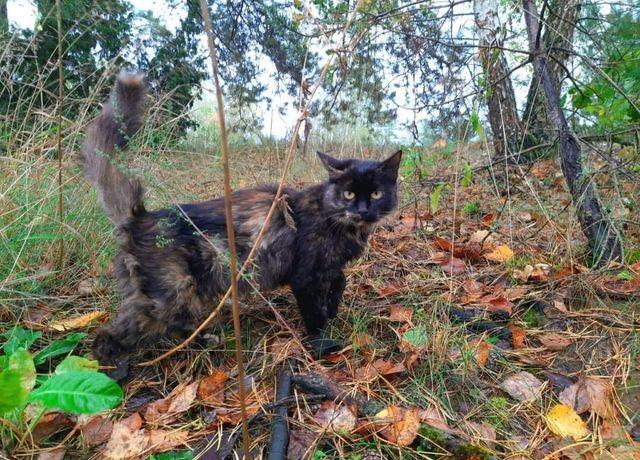 Kocia rodzinka PILNIE szuka domu !!!