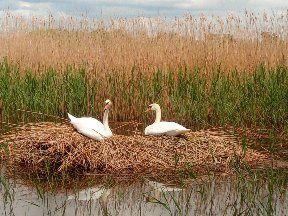Pokoje nad Jeziorem Rajgrodzkim Bon Turystyczny!