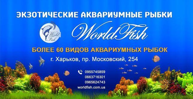 Зоомагазин аквариумистики, более 70 видов аквариумных рыбок