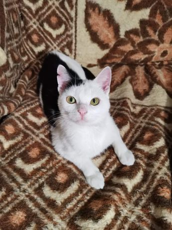 Pingu, cudnej urody kociak