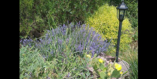 семена многолетних кустарников