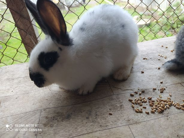 Продам двух кроликов