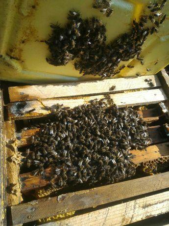 Продам бджолосім'ї на 3- 4 рамки.