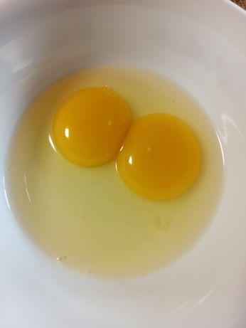 Świerze jajka wolny wybieg wiejskie