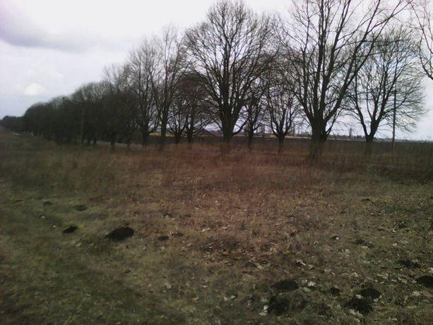 Продам земельну ділянку під садівництво