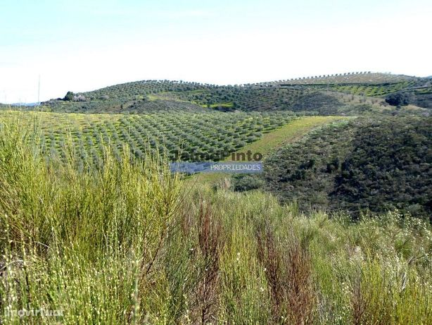 5ha terra agrícola p/ Olival, Amendoal, Casa prefabricada. Portugal...