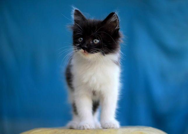 Безкоштовно дуже гарні кошенята