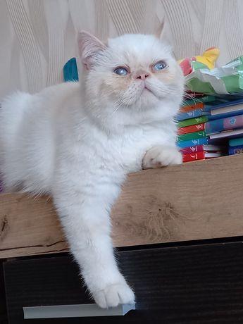 Продам котика экзота