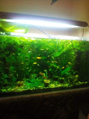 Продам лампу для аквариума