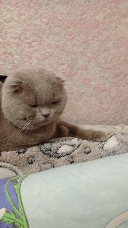 Вислоухий кот, ждёт кошечку.