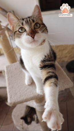 Caracol - gato para adopção
