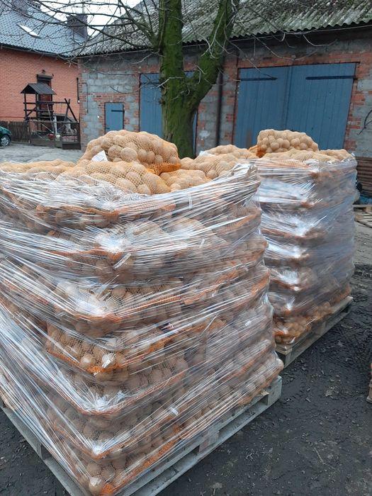 Ziemniaki jadalne Czechel - image 1