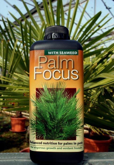 PalmFocus 1 L (Składniki Odżywcze Dla Palm)