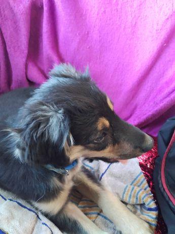 Найдена маленькая черная собачка с синим ошейником на степовой