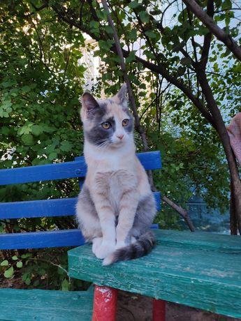 Кошечка ищет хозяев
