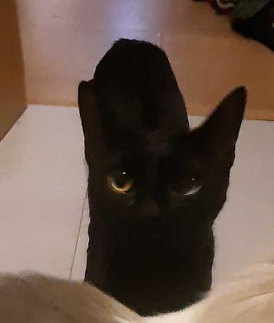 Gato para dar 5 meses